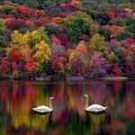 jmw-110509-newslettter-fall-image-with-swans